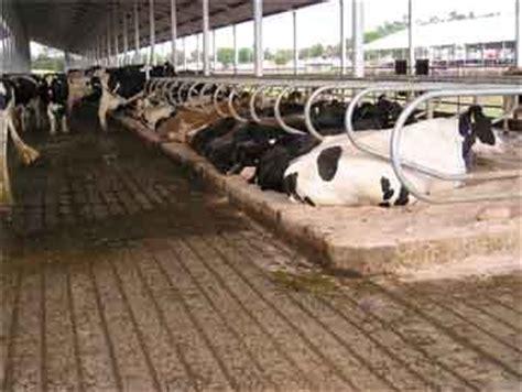 manejo de instalaciones para 8415848722 instalaciones para ganado lechero estabulado complemento gr 225 fico engormix