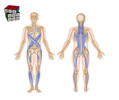 cadenas musculares tronco oblicuos que estabilizan