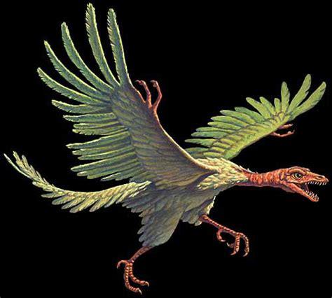 dinosauri volanti foto e immagini di dinosauri volanti archaeopteryx