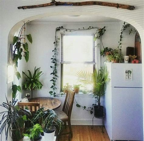 ivy home decor 25 best ideas about ivy plants on pinterest small