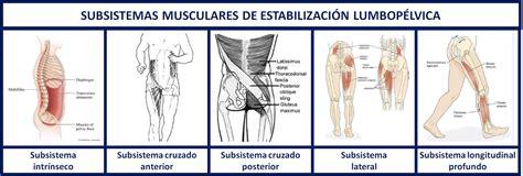 cadenas musculares rodilla valoraci 243 n del movimiento y prescripci 243 n de ejercicio los