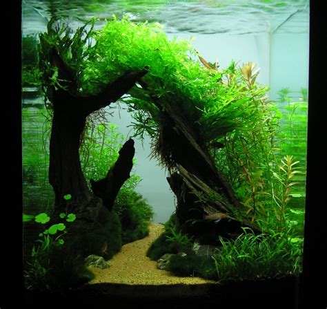 aquascape gallery aquascaping world competition gallery sleepy hollow by