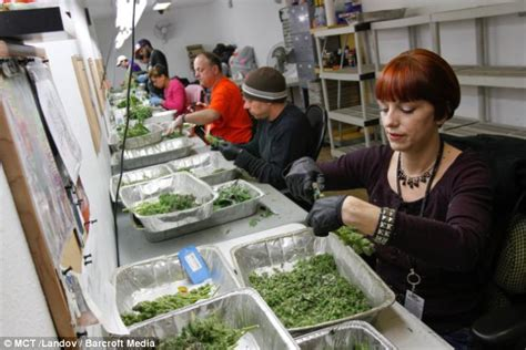lade per marjuana crime tax revenues up 11m after colorado legalized