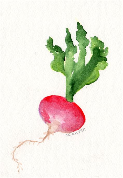 original red radish painting watercolor vegetable series 5 x 7 original painting watercolor