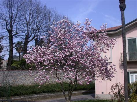 alberi colorati da giardino giardinaggio terra argillosa tre soluzioni