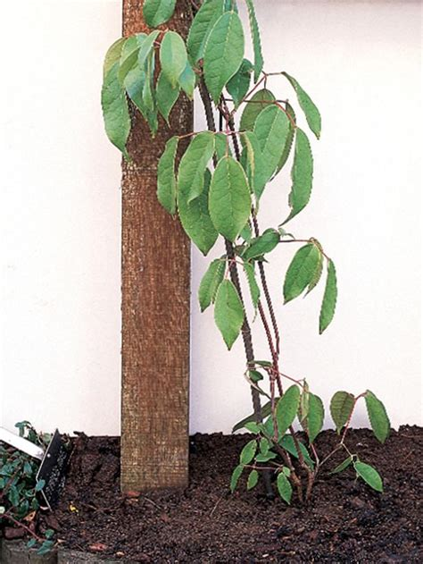 planting climbing plants how to choose and maintain climbing plants diy garden