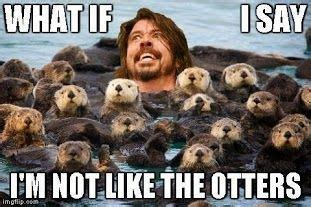Foo Fighters Meme - 17 best images about i love puppies on pinterest warm