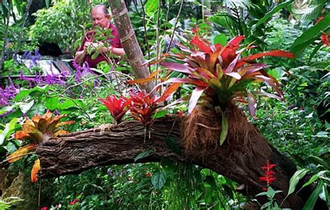 what plants grow in a tropical rainforest bromeliads growing on an ancient tree trunk sub