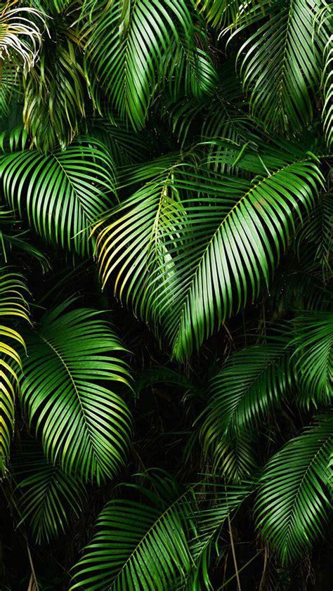 wallpaper tropical green wallpaper iphone beaches tropical travel pinterest