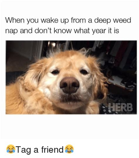 waking up to how cannabis can be key to feeling and aging better a guide to new uses and benefits of marijuana for your mind books when you up from a nap and don t what