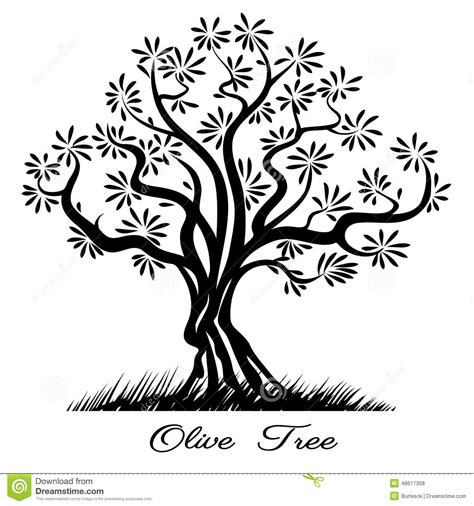 coloring page of olive tree olive tree silhouette stock vector image 48617308