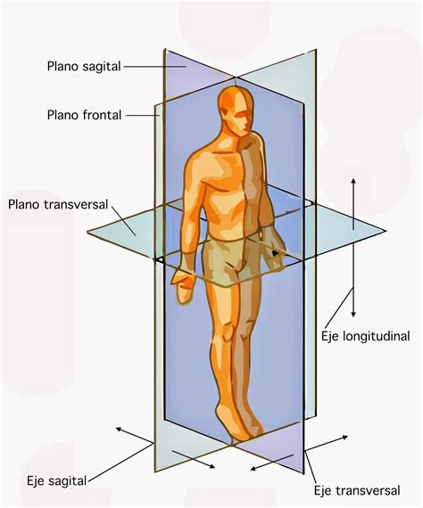 anatoma para posturas de 8415053150 anatom 237 a posici 243 n anat 243 mica planos o ejes del cuerpo