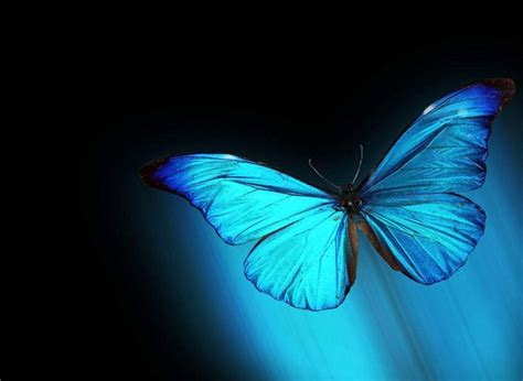 Live Butterfly Wallpaper For Windows 7 by Best 25 Live Wallpaper For Pc Ideas On Free