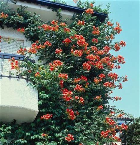 Blumen Garten Pflanzen 1531 by Pflanzen Mit Urlaubsflair Garten Pflanzen News