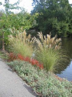 grasses edging border plants walkways images