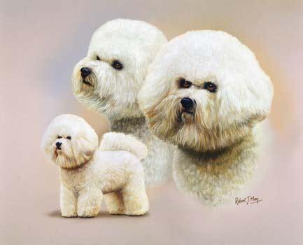 basenji puppy price range basenji price range breeds picture breeds picture