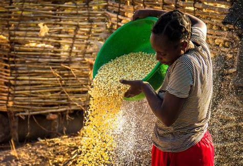 obbligazioni etica world bank emette bond in kwacha con rendimento 21