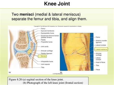 chapter 8 section 3 section 3 chapter 8 knee joint and joint disorders