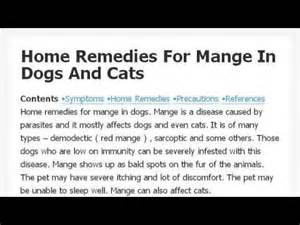 home remedies for mange related keywords suggestions for home remedies for mange