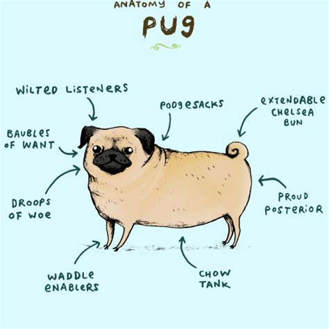 words with pug always write anatomy of a word and character