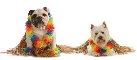 moving to hawaii with dogs island pet movers we relocate pets