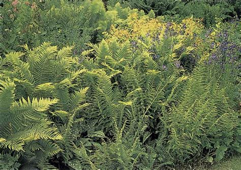 Fern Garden Ideas Fern Garden Ideas