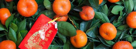 new year oranges with leaves citrus fruit for new year save ca community