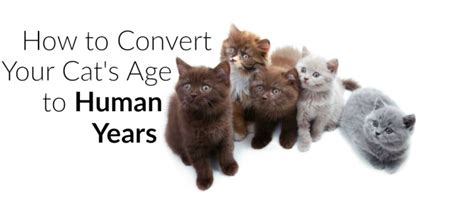 convert human years to years how to convert cat years into human years
