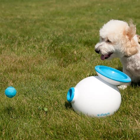 backyard dog toys ifetch interactive dog ball launcher healthypets