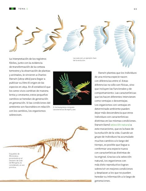 Ciencias Naturales 6to Grado By Sbasica Issuu | ciencias naturales 6to grado by sbasica issuu