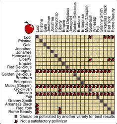 fruit tree spacing chart european plum varieties maturity and pollination chart