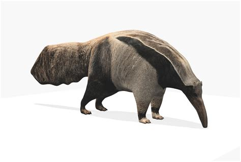 anteater  model max ds cgtradercom