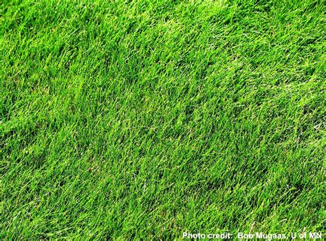 Grass Types by How To Identify Northern Virginia Grass Types