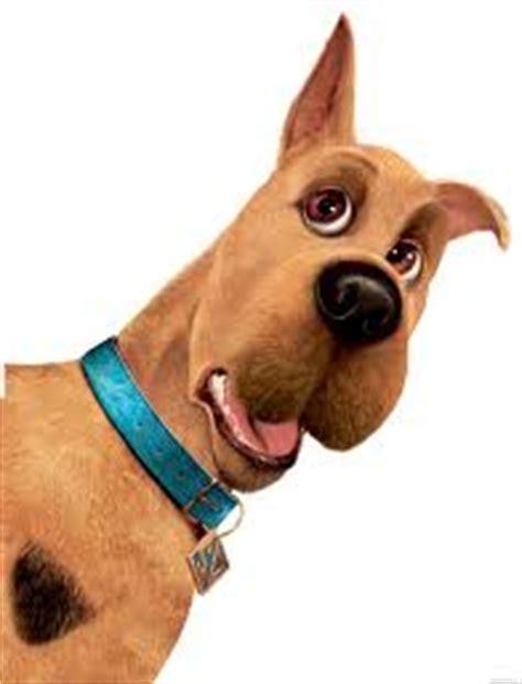 scooby doo breed great dane dogs breeds pets