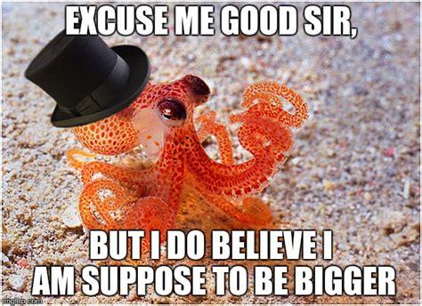 Octopus Meme - octopus imgflip