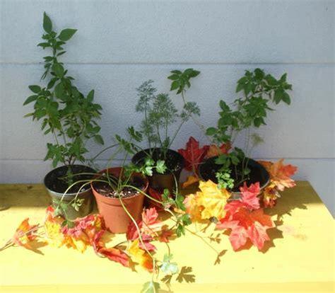 fall herb garden activities