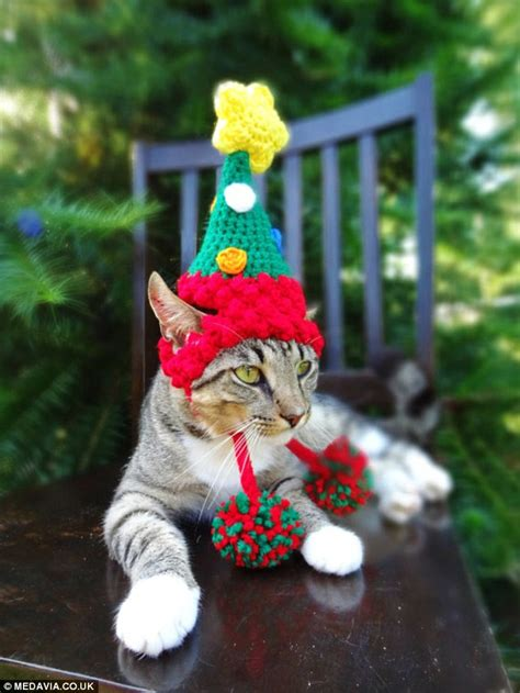 repel cat christmas tree photos show cats dogs rabbits and even a hedgehog dressed for jumper day daily