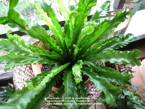 foliage house plant identification matelic image indoor tropical house plants identification