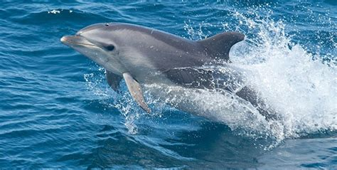 Beat Magnum By Dolphin Kalibata charleston s dolphins serve to point out possible