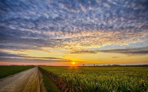indiana corn sunset milford  zealand desktop wallpaper