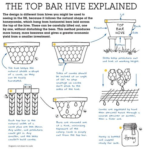 How To Build A Top Bar Bee Hive by 17 Best Ideas About Bee Hive Plans On