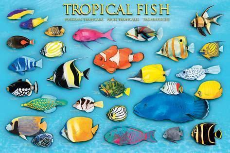 printable fish poster tropical fish prints at allposters com