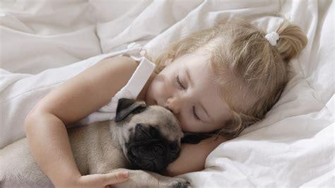 best brush for pugs pug puppies wallpaper hd 11 widescreen desktop litle pups