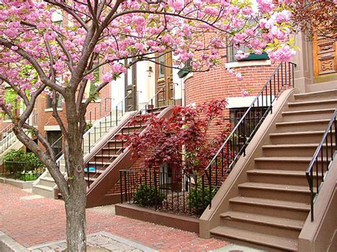Apartment Rentals In Boston South End South End Boston Apartments Homes Rentals Furnished