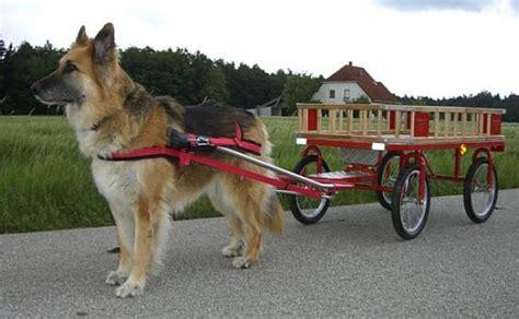 hunde wagen sulkybau towara hundewagen