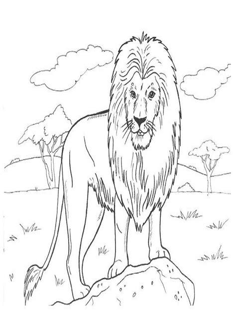 imagenes de animales de la selva para imprimir animales salvajes dibujos para colorear