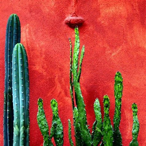 jardins mexicanos a festa da cor jardins amigos e