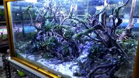 tutorial aquascape jungle stylepemula bisa youtube