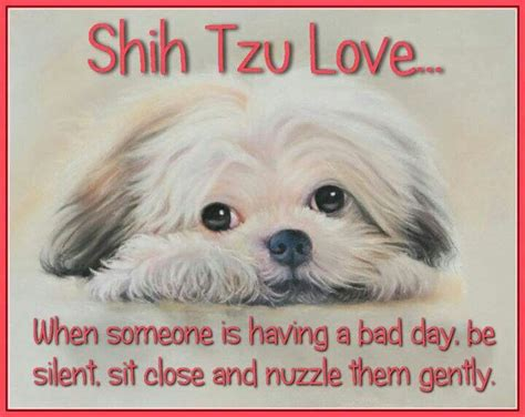 shih tzu quotes 574 best images about sayings shih tzu s on my pin and