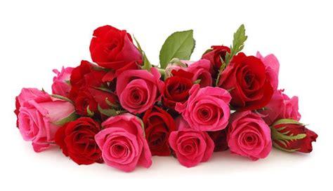 info lengkap mengenai bunga mawar selingkaran